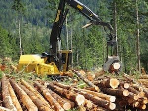 Triad logging machinery in the field stripping logs